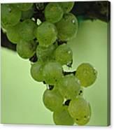 Vineyard Grapes I Canvas Print