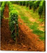 Vineyard In Burgundy France Canvas Print