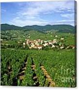 Vineyard Of Beaujolais In France Canvas Print