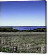Vineyard Of Leelanau Michigan Canvas Print
