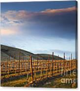 Vineyard Storm Canvas Print
