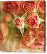 Vintage Peaches N Creme Spray Roses Canvas Print