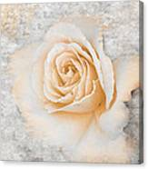 Vintage Rose II Canvas Print