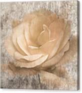Vintage Rose IIi Canvas Print