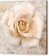 Vintage Rose V Square Canvas Print