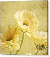 Vintage Vanilla Canvas Print