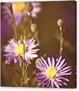 Vintage Violet  Canvas Print