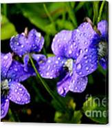 Violet And Raindrops Canvas Print