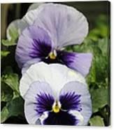 Violet Pansies Flower Canvas Print