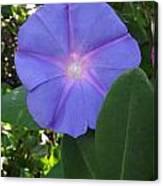 Violet Star Canvas Print