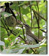 Vireo And Cowbird Canvas Print