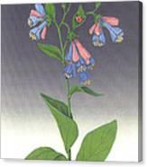 Viriginia Bluebells Canvas Print