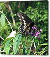 Visit From A Black Swallowtail Canvas Print