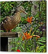Visitor To The Feeder Canvas Print