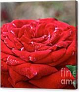 Viva Red Canvas Print