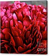 Vivid Red Canvas Print