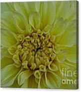 Vivid Yellow Dahlia Canvas Print