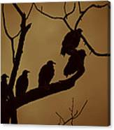 Vulture Island Canvas Print