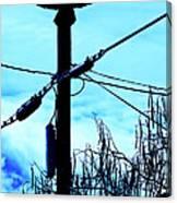 Vulture On Phone Pole Canvas Print