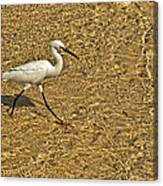 Wading For A Meal Canvas Print