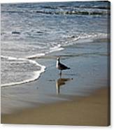 Waiting For Lunch On Shore Canvas Print