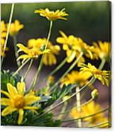 Waking Up To Sunshine Canvas Print
