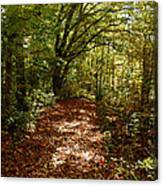 Walk In The Woods Canvas Print