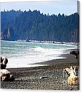 Walk On La Push Beach Canvas Print