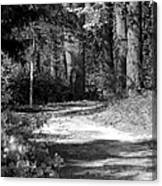 Walking In The Springtime Woods In Black And White Canvas Print