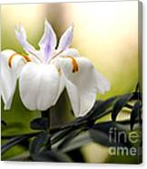 Walking Iris Flower Canvas Print