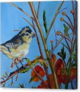 Warbling Verio Canvas Print