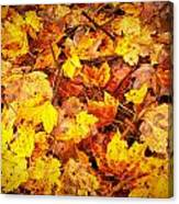 Warm Leaves 5879  Canvas Print