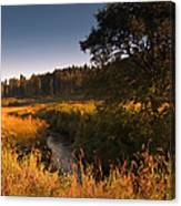 Warm Morning Sun. The Trossachs National Park. Scotland Canvas Print