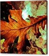 Warm Oak Canvas Print