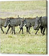 Warthogs In Masai Canvas Print