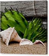 Washed Up On The Beach Canvas Print