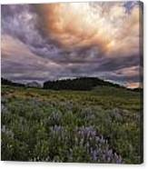 Washington Gulch Flowers Canvas Print