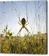 Wasp Spider Argiope Bruennichi In Web Canvas Print