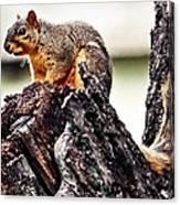 Watchful Squirrel Canvas Print