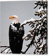 Watching Over The U.s.a. Canvas Print