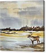 Watching The Herd Canvas Print