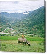 Water Buffalo Boy Canvas Print
