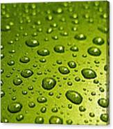 Green Card. Macro Photography Series Canvas Print