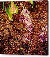 Water Flowers Vietnam Canvas Print