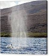 Water From A Whale Blowhole Canvas Print