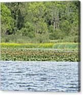 Water Landscape Canvas Print