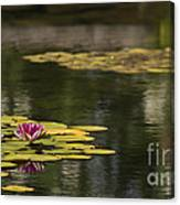 Water Lilies And Lily Pads Canvas Print