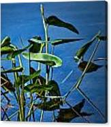 Water Lilies No.098 Canvas Print