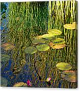 Water Lilies Reflection Canvas Print