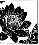 Water Lily Black And White Canvas Print